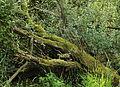 Nationaal Park De Alde Feanen. Locatie, It Wikelslân 023.JPG