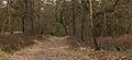 Nationaal Park Drents-Friese Wold. Locatie Dieverzand 01.jpg