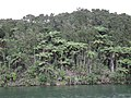 Native bush and tree ferns on shore of Lake Tarawera 1.jpg