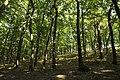 Natural monument Krásná stráň in 2014 (4).JPG