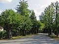Naturdenkmal Hainspitz Seedamm-Allee.jpg