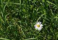 Naturpark Thal mcassina 52.jpg