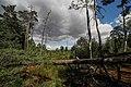 Naturschutzgebiet Bergen-Weißacker Moor 1.jpg