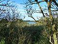 Natuurgebied Aalkeetbuitenpolder.jpg