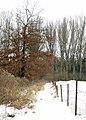 Natuurreservaat Hollogne sur Geer - panoramio (3).jpg