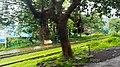 Neral - Matheran Rd, Neral, Maharashtra 410101, India - panoramio.jpg