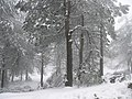 Neve no Monte Faro - panoramio.jpg
