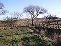 New Luce Trail - geograph.org.uk - 695303.jpg