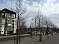 New trees by new buildings (44849151684).jpg