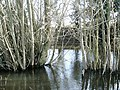 Newhill pond - geograph.org.uk - 361721.jpg