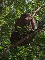 Niño de térmites - Quintana Roo - México-2.jpg