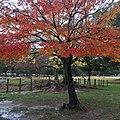 Noboriojicho, Nara, Nara Prefecture 630-8213, Japan - panoramio (6).jpg
