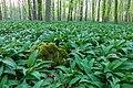 Nordkirchen, Naturschutzgebiet Ichterloh -- 2018 -- 2047.jpg