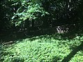 Nycanderska gravplatsen IMG 0872 Tossene 158-1 RA 10161201580001.jpg