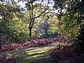 Oak trees in the Amberwood Inclosure, New Forest - geograph.org.uk - 81065.jpg
