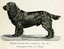 A drawing of a dark-colored cocker spaniel, in profile, facing left