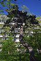 Odesa Chkalova resort Kedr 51-101-5032 DSC 3812.jpg