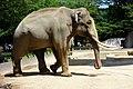 Oji zoo, Kobe, Japan (26762040701).jpg