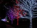 Oklahoma City Christmas Lights - panoramio - MARELBU (12).jpg