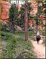 On the Trail, Bryce Canyon 9-09 (8551603603).jpg