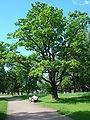Oranienbaum park 3.JPG