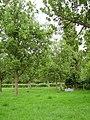 Orchard, Aston - geograph.org.uk - 206288.jpg