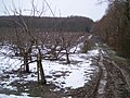 Orchard near Hemsted Forest - geograph.org.uk - 1709547.jpg
