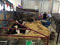 Oregon State Fair 2016 01.jpg