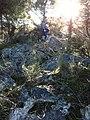 Orman içi - panoramio.jpg