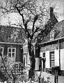 Overzicht van een gedeelte van de binnenplaats met boom - Leiden - 20415680 - RCE.jpg