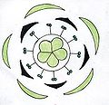 Oxalis floral diagram.jpg
