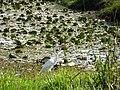 Pássaro em Viamão 003.JPG