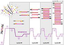 wiki medizinische mikrobiologie druckversion