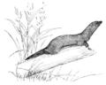 PSM V54 D814 Weasel.png