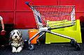 Pa shopping med hunden, Karin Beate Nosterud.jpg