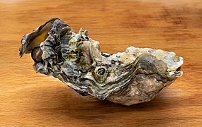 Pacific oyster from Brofjorden on a chopping board in Tuntorp.jpg