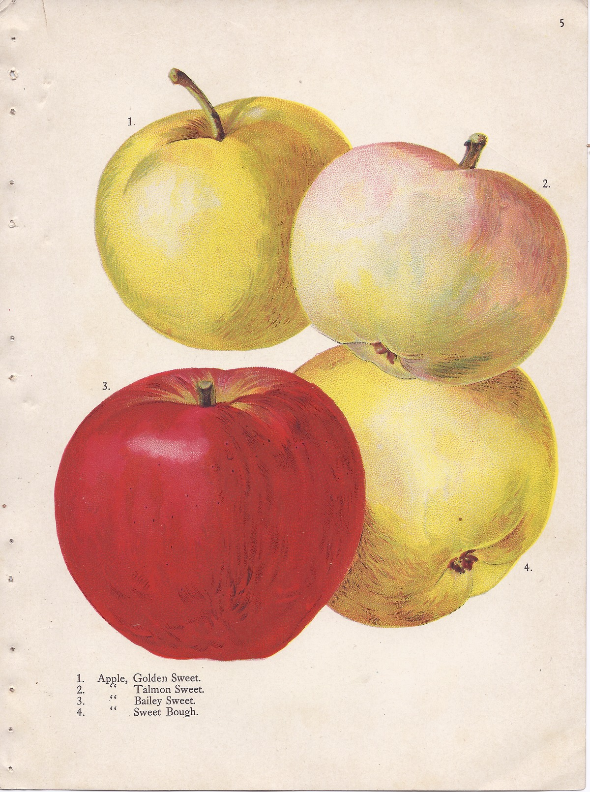 List of apple cultivars - Wikipedia