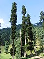 Pahalgam views 51.JPG