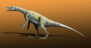 Sauropodomorpha - Restoration of Panphagia, one of the most basal sauropodomorphs known