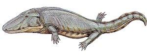 Mastodonsauroidea - Restoration of Paracyclotosaurus