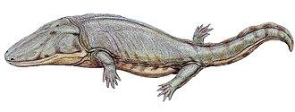 Paracyclotosaurus - Paracyclotosaurus davidi restoration