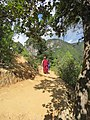 Paro Taktsang, Taktsang Palphug Monastery, Tiger's Nest -views from the trekking path- during LGFC - Bhutan 2019 (306).jpg