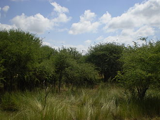 La Pampa Province - Parque Luro Natural Prairie Preserve.
