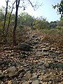 Path leading to stone inscription - Susunia hill.jpg