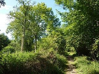 Bradfield Woods Suffolk Wildlife Trust nature reserve