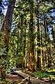Pathway in the muir woods.jpg
