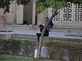 People reading Hafez poetry (2151305285).jpg