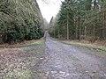 Petworth Park estate road into Pheasant Copse - geograph.org.uk - 1734981.jpg
