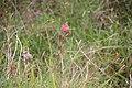 Pflanze, westliches Barra.jpg