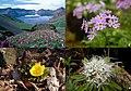 Photo exhibition of wildflowers (4433924335).jpg
